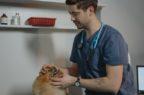 """L'appello dei veterinari europei: """"Vaccinateci tutti"""""""