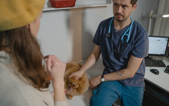 Giovani veterinari, bando Enpav per neolaureati