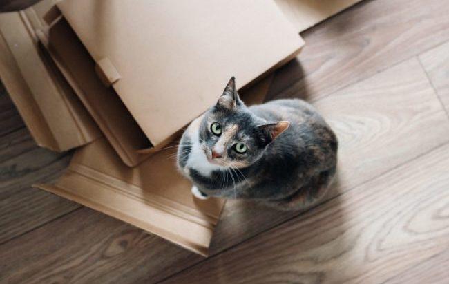 Fasi della vita felina: da due delle maggiori società veterinarie un aggiornamento delle linee guida