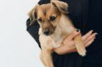Farmaci animali, parere positivo per alcune variazioni di indicazione