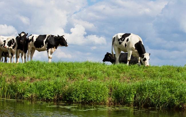 Sicurezza alimentare, Efsa interroga gli stakeholder sulla strategia 2027