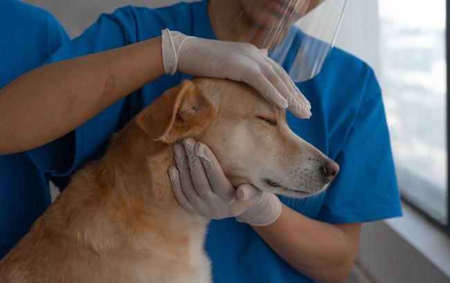 """Uso in deroga dei farmaci umani, Fnovi: """"Veterinari non interpellati"""""""