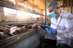 Gestire le emergenze: così si muove in Italia la sanità veterinaria