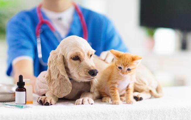 Animal health, sale all'80% la partecipazione di Petinvest nel Gruppo Demas (distribuzione prodotti veterinari)