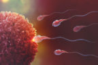 Infertilità: al ministero della Salute un tavolo su ricerca, formazione, cura e prevenzione