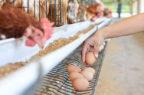Antibiotico-resistenza e filiera alimentare: i fattori ambientali contano