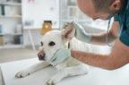 Uso in deroga e antibiotici: l'estate rovente del farmaco veterinario
