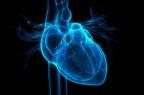 "Riparare i danni cardiaci ""riprogrammando"" i cardiomiociti"