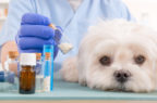 Antibiotici riservati all'uomo: appello dei veterinari a Governo e Parlamento Ue