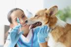Legge di delegazione europea: un emendamento fa arrabbiare i distributori di farmaci veterinari
